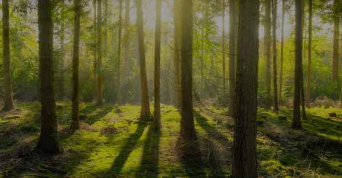 Sustainable and responsible green forest in sunset